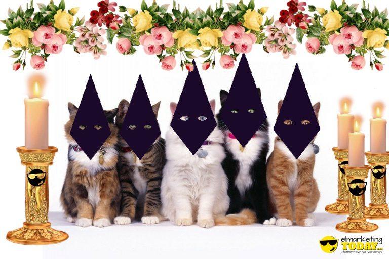 Los Gatos de Instagram hacen una procesión