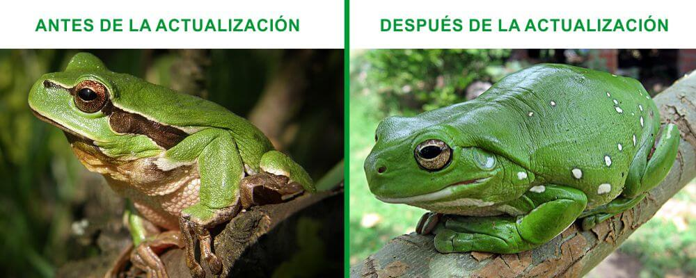 Antes y después de la actualización de Screaming Frog